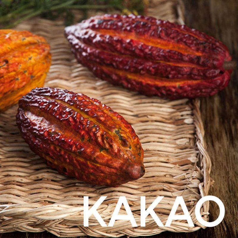 kakao-e1565785193767.jpg